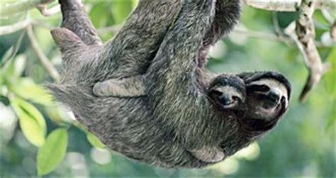 regenwald tiere tukane abenteuer regenwald