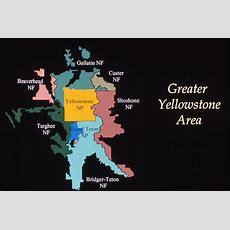 Yellowstone's