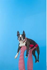 Ich Suche Einen Großen Hund : haustier anschaffung darauf sollten eltern achten ~ Jslefanu.com Haus und Dekorationen