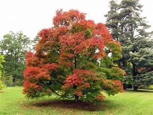 Quel Arbre Planter Près D Une Maison : pourquoi les feuilles tombent en automne ~ Dode.kayakingforconservation.com Idées de Décoration