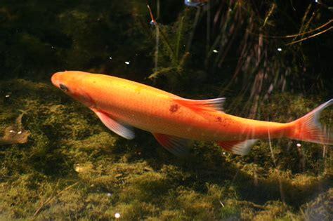 quelles esp 232 ces de poissons peut on accueillir dans un bassin animogen