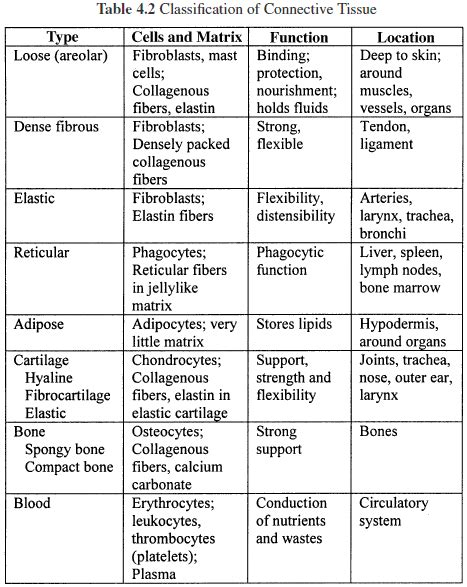 Connective Tissue Types  بحث Google‏  Histology  Pinterest  Tissue Types