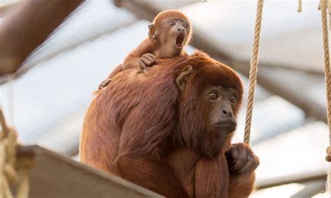 groupon kölner zoo dagticket voor de k 246 lner zoo k 246 lner zoo groupon