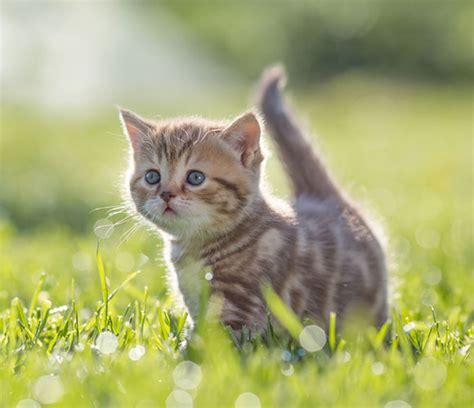 Katzen-Ratgeber: Alles zu Kater, Kitten & Katze