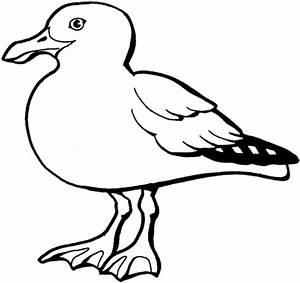 california gull coloring page free printable coloring pages With wiringmod2