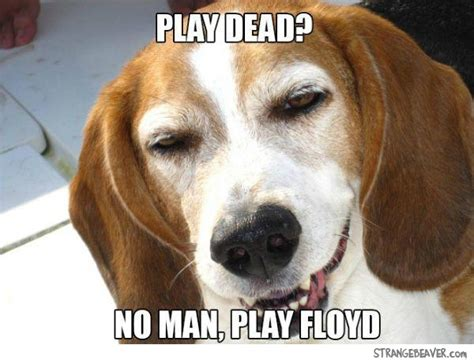 Stoned Dog Meme - best of the stoned dog meme strange beaver