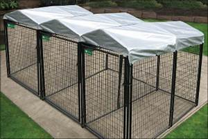 Adjoining multi run dog kennels for breeders and boarding for Multi run dog kennels
