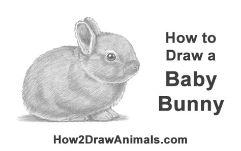 draw  rabbit baby video step  step pictures