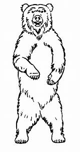 Pictures Of Bears Standing Up - Cliparts.co