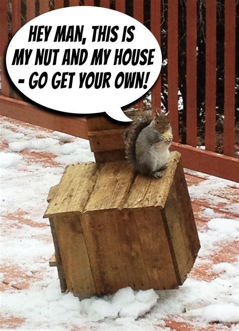 pallets  rustic squirrel hotel