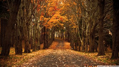 1080p Fall Backgrounds Hd by Autumn Hd Wallpapers 1080p 76 Images