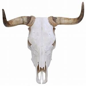 Spanish Fighting Bull Skull Adhesive Taxidermy Wall