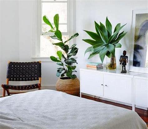 plantes pour chambre une plante dans une chambre c 39 est dangereux