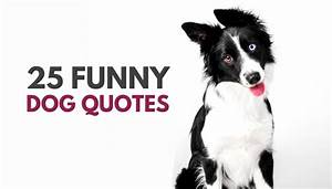 30 Cute & Funny Dog Quotes - Puppy Leaks