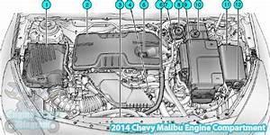 2010 Chevy Malibu 2 4 Labeled Engine Diagram Inhertancediagrams Julialik Es