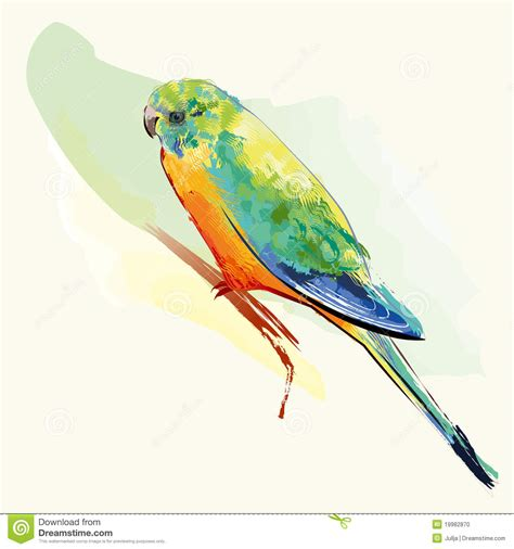 bird with colorful feathers parakeet bird with colorful feathers stock photo image