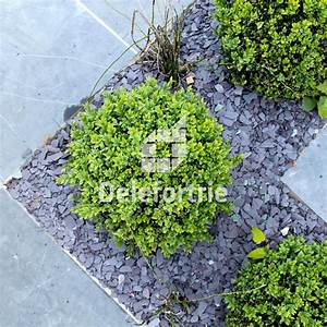 massif design delefortrie paysages With amenagement de massif exterieur 3 massif design delefortrie paysages