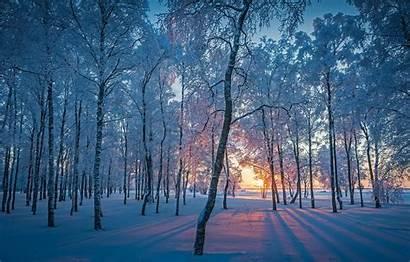 Winter Forest Wallpapers Snow Desktop Morning Zima