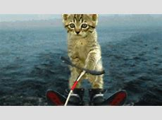 Cat GIF Find & Share on GIPHY
