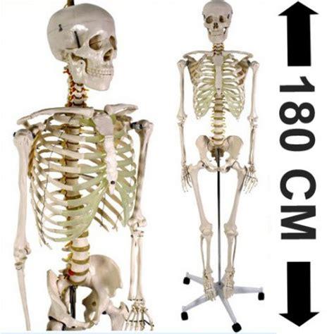 magasins ustensiles cuisine acheter squelette humain 180cm achat squelette du corps