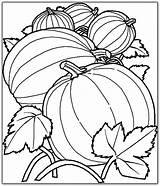 Coloring Pumpkin Harvest Printable Drawing Benefits Stumble Tweet sketch template