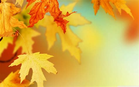 Autumn Leaves Wallpaper, Awesome Natural Autumn Leaves ...