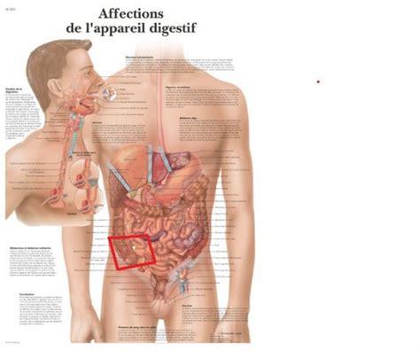 Mal Au Foie Et Au Dos by Douleur Au Ventre Cot 233 Droit Inexpliqu 233 Maux De