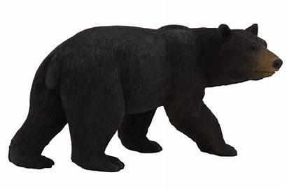Bear American Animal Transparent Planet Background Polar