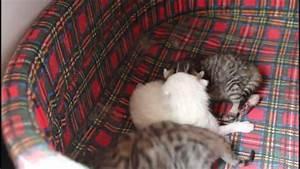 Tre Gattini Appena Nati!! YouTube