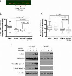 Dysregulation Of Replication Initiation And Induction Of Dna Damage And
