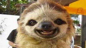 Sloths Smiling | www.pixshark.com - Images Galleries With ...