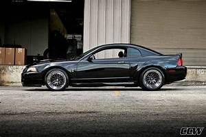 '04 Cobra / CCW Classics   Mustang cars, Camaro vs mustang, Sn95 mustang