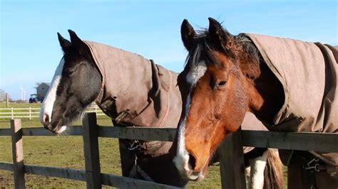 horses meet pets