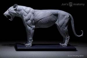 Lion Anatomy Model Open