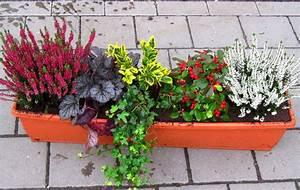 Kübel Bepflanzen Winterhart : balkonpflanzen set pflanzen versand harro 39 s pflanzenwelt ~ Michelbontemps.com Haus und Dekorationen