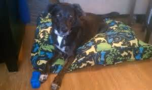 austin dog trainer reviewscertified austin dog trainer