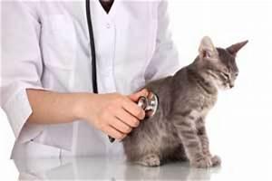 Comment Savoir Si Son Catalyseur Est Bouché : comment savoir si son chat est malade et souffre ~ Gottalentnigeria.com Avis de Voitures