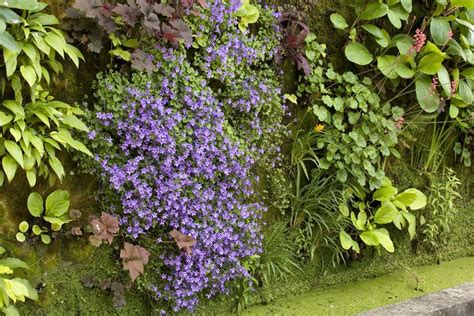 Vertical Garden History-the Best Plants For Walls