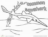 Coloring Sawshark Shark Sharks Common Worksheet Week Education Pages Drawing Colouring Boys Sea Animals Uložene Under sketch template