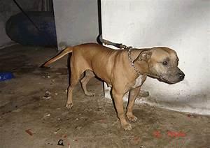 Iron Dog Ofen : online pedigrees 203255 iron dog kennel 39 s annis ~ Frokenaadalensverden.com Haus und Dekorationen