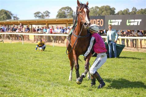 horse horses racing races race thoroughbred track killed october australia racehorse leg injured cup jumps kills avoid reasons mckay jim
