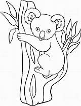 Koala Coloring Pages Baby Cute Printable Drawing Doodle Bear Tree Smiles Animals Vector Australian Illustration Getdrawings Line sketch template