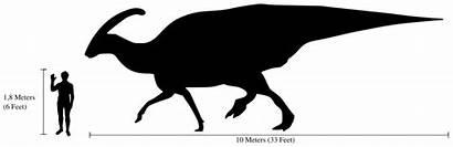 Parasaurolophus Human Comparison Svg Taille Compared Walkeri