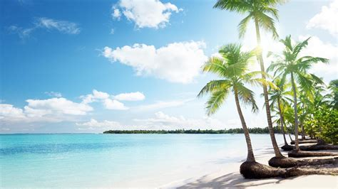 palmeiras tropicais praia de areia hd parede  desktop