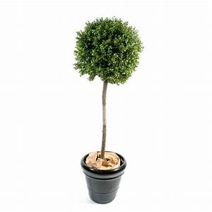 Vente De Plantes En Ligne Pas Cher : buis boule sur tige pas cher prix achat vente en ligne ~ Premium-room.com Idées de Décoration