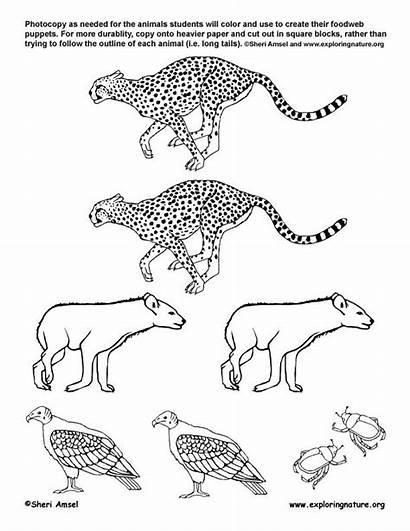 Grassland African Drawing Web Animals Webs Grade