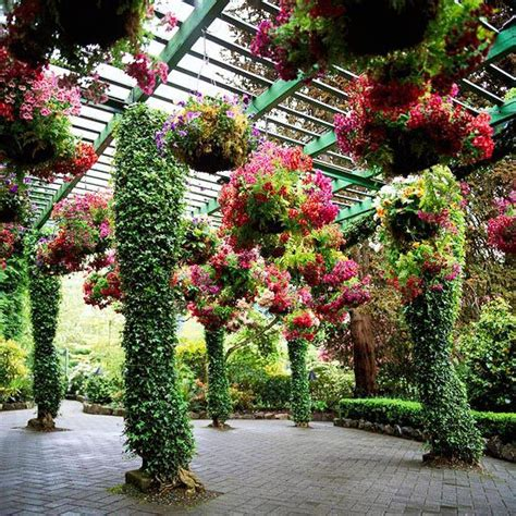 plants for a pergola add interest to your yard with a pergola gardens hanging baskets and plants