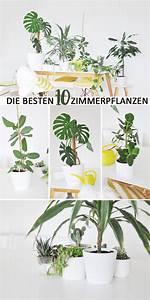 Zimmerpflanzen Für Schlafzimmer : die besten zimmerpflanzen f r die wohnung wohnung ~ A.2002-acura-tl-radio.info Haus und Dekorationen
