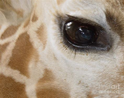Which Animal Has Pretties Eyes