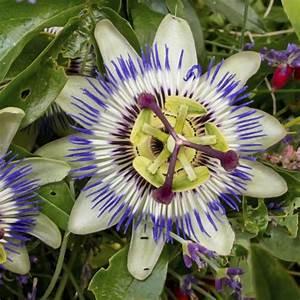 Quelles sont les fleurs à planter au printemps ? Ooreka